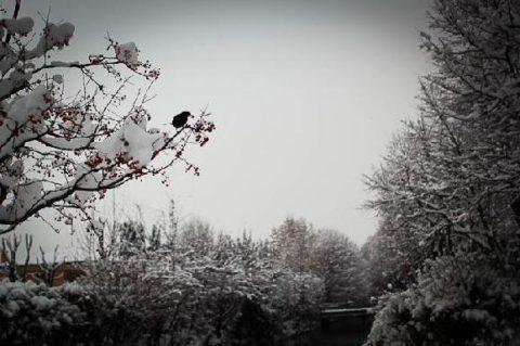 Il blog dell'Osservatore: inviaci la tua foto nella neve!