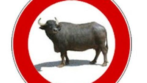 News: bufala o realtà?