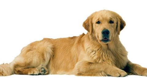 La crudeltà nei confronti dei cani