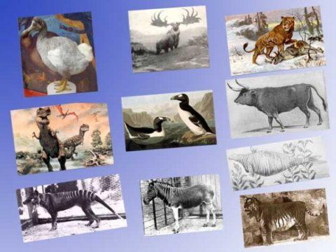 STOP ALL'ESTINZIONE DEGLI ANIMALI !!!