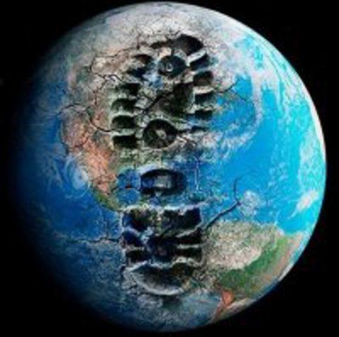 La difficile sopravvivenza degli animali in questo mondo inquinato
