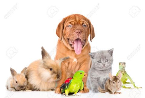 ATTENZIONE A NON DISCRIMINARE ANCHE GLI ANIMALI