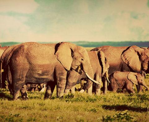 ALLARME WWF: IL MONDO RISCHIA DI PERDERE METÀ DELLE SPECIE ANIMALI