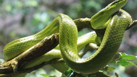 Il serpente: un animale avvolto nel mistero