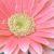 Foto del profilo di ruruan